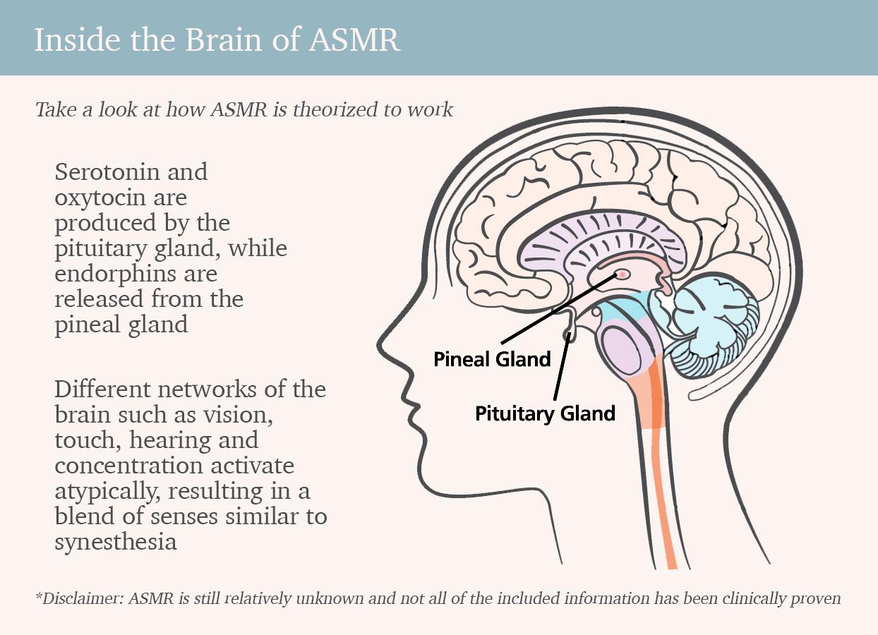 Information from Smithsonian Magazine and ASMR University. Graphic Credit: Amy Thorpe & Bēhance/Denise Wawrzyniak