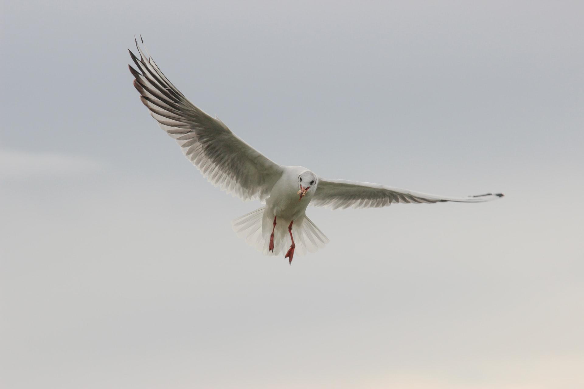 A menacing seagull. Image credit: Sebastian Herrmann on Unsplash.