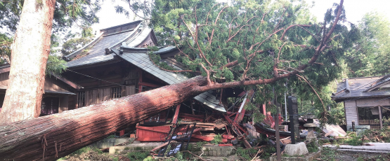 Large tree falls onto house